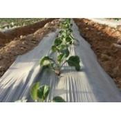 Bolsas Biodegradables (15)